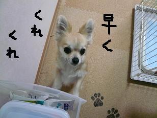 P1000563-deji.jpg