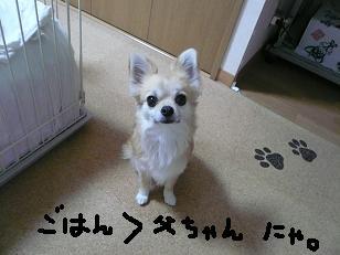 P1000567-deji.jpg