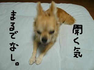 P1010247-deji.jpg