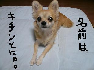 P1010248-deji.jpg