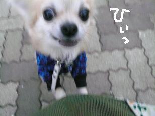 P1010378-deji.jpg