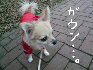 P1010440-deji.jpg