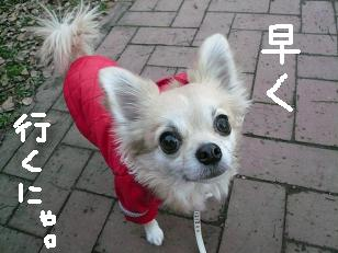 P1010451-deji.jpg