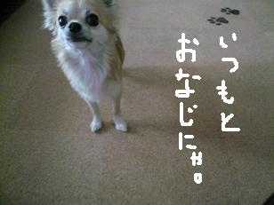 P1010653-deji.jpg