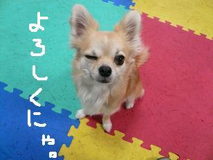 P1010834-deji.jpg