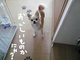 P1020237-deji.jpg