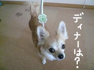 P1020249-deji.jpg
