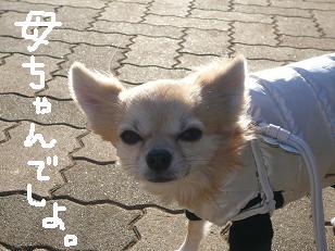 P1020337-deji.jpg