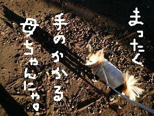 P1020456-deji.jpg
