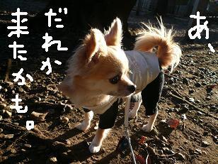 P1020463-deji.jpg