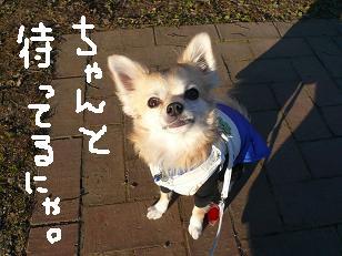 P1020507-deji.jpg