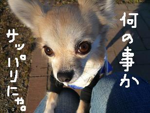 P1020528-deji.jpg