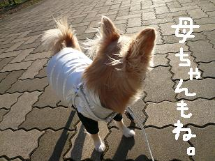 P1020596-deji.jpg