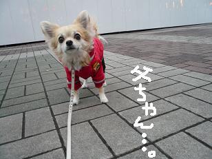P1020838-deji.jpg