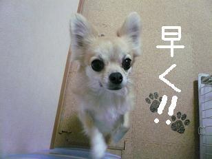 P1020982-deji.jpg