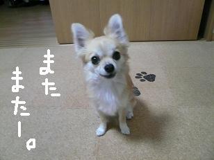 P1030023-deji.jpg