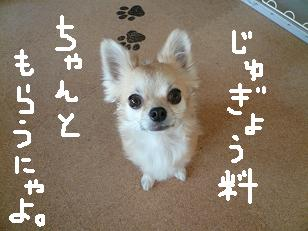 P1030377-deji.jpg