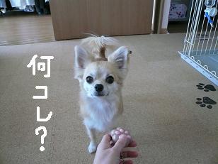 P1030449-deji.jpg
