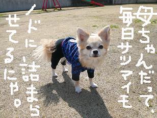 P1030536-deji.jpg