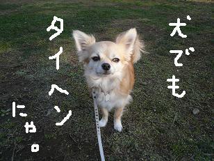 P1030576-deji.jpg