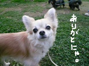 P1030749-deji.jpg