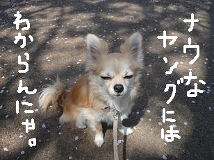 P1030769-deji.jpg
