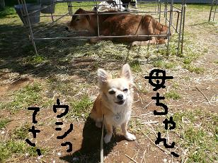 P1030795-deji.jpg