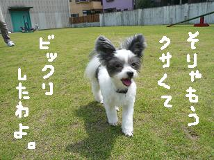 P1040054-deji.jpg