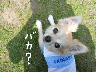 P1040083-deji.jpg