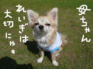 P1040093-deji.jpg