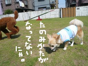 P1040127-deji.jpg