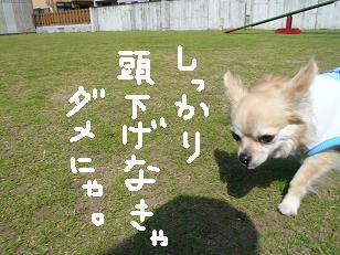 P1040130-deji.jpg