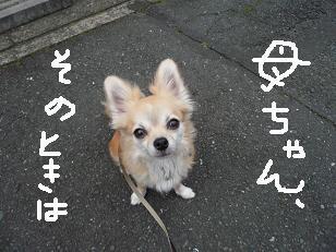 P1040269-deji.jpg
