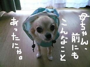 P1040321-deji.jpg