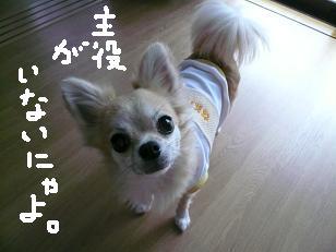P1040518-deji-2.jpg