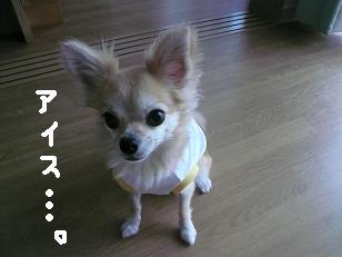 P1040548-deji.jpg