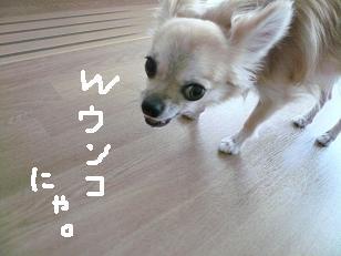P1040608-deji.jpg