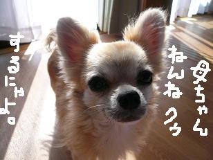 P1050030-deji.jpg