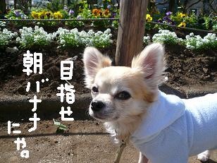 P1050310-deji.jpg