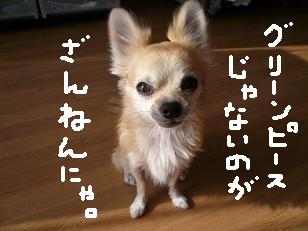 P1050316-deji.jpg