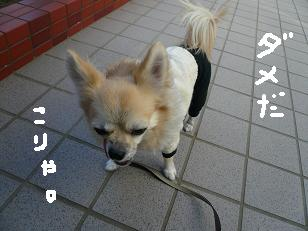 P1050413-deji.jpg