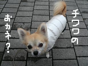 P1050503-deji.jpg