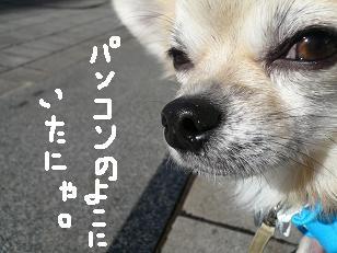 P1050519-deji.jpg