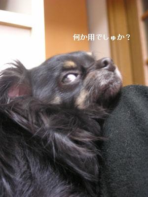 '09.2.9(2)・2 コピー