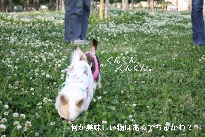 IMG_0351・2 コピー