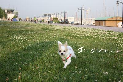 IMG_0369・2 コピー