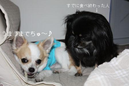 IMG_0484・2 コピー