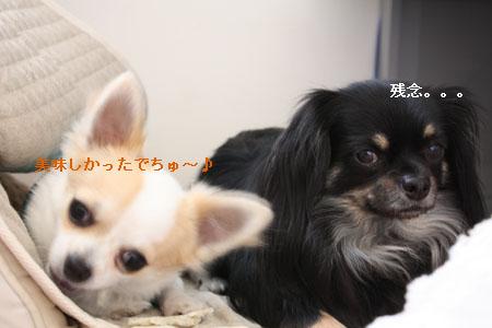 IMG_0492・2 コピー