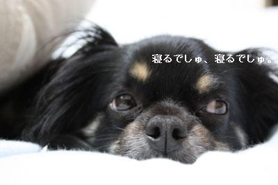 IMG_0936・2 コピー