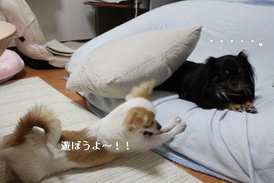 IMG_0942・2 コピー